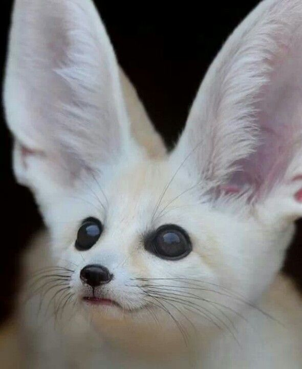 1000+ images about albinism on Pinterest | Animals, Albino ... Albinism In Animals And Plants