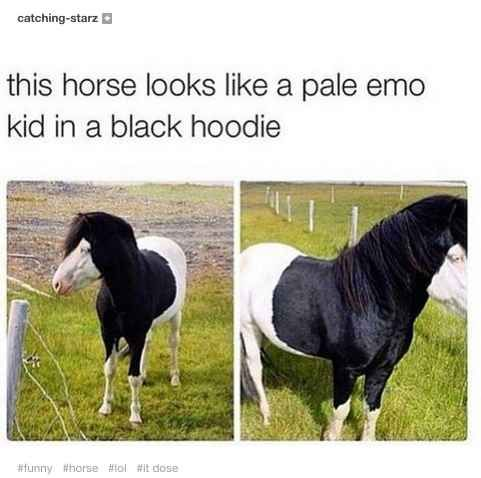 This horse that was basically you every day in 2007: