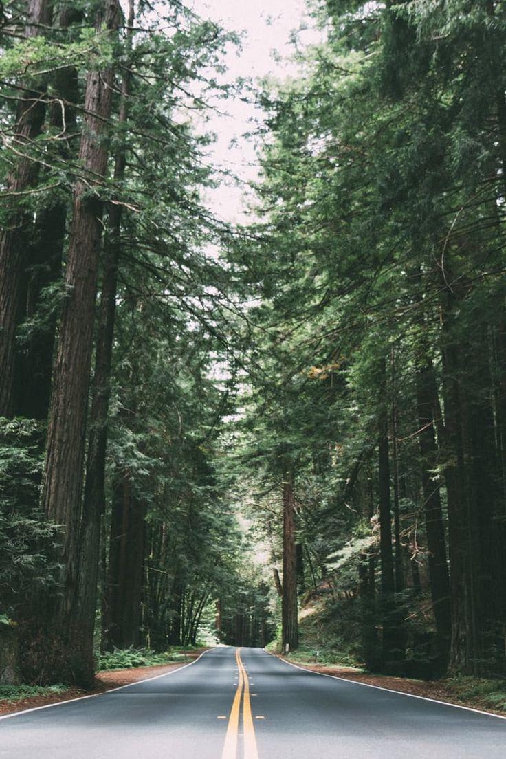 Road Between Green Trees