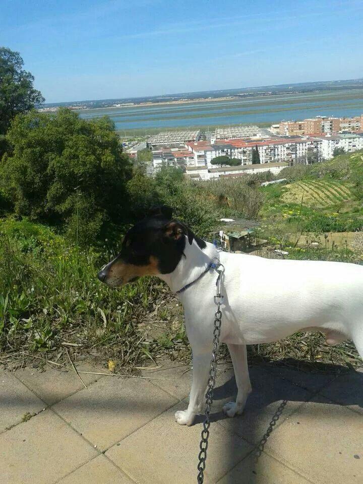 Paseando por #ElConquero, #Huelva. #NoSinMiPerro