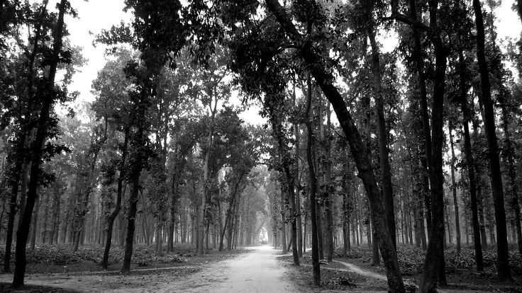Gorakhpur, Timber forest,UP, India