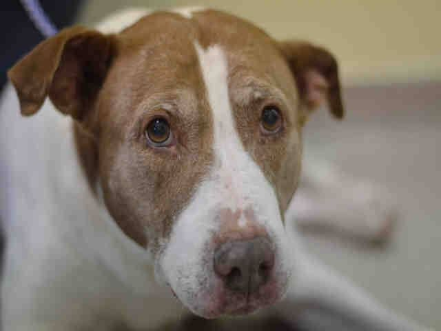 6812 Best Animals Available For Adoption And Want A