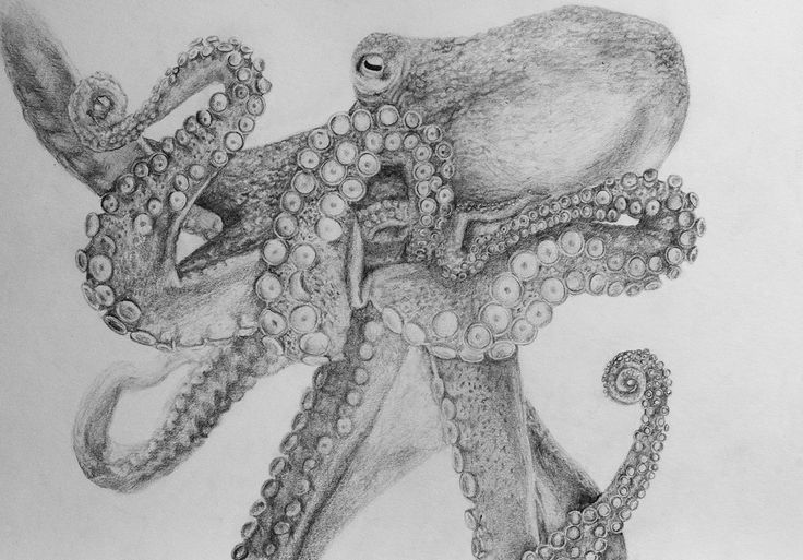 Octopus - Pencil illustration on Behance