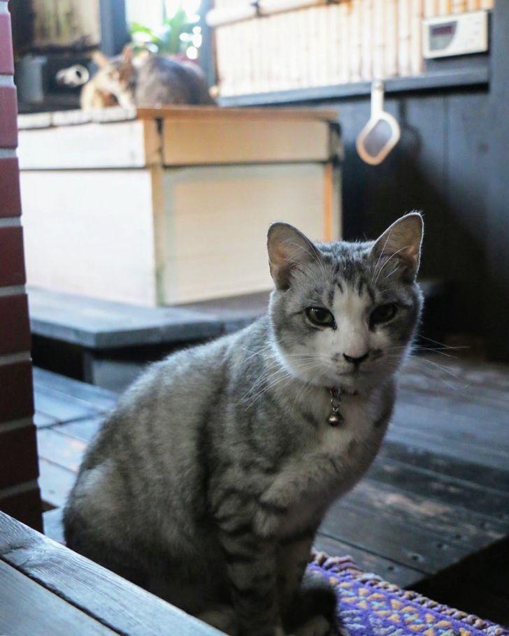 ネコ天国 南房総 月影の丘ホテル ヴィラ勝山アヴェール で12匹の看板猫に癒されてきた 東京散歩ぽ 猫 東京 散歩 ペット