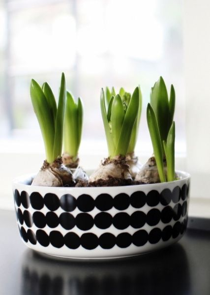 Marimekko Rasymato looks good with these bulbs and a creative use for Spring, we Love it!!