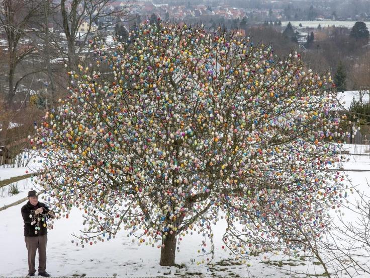 Duitser versiert boom met 10.030 paaseieren |