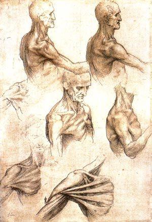 Leonardo Da Vinci's Anatomy Drawings