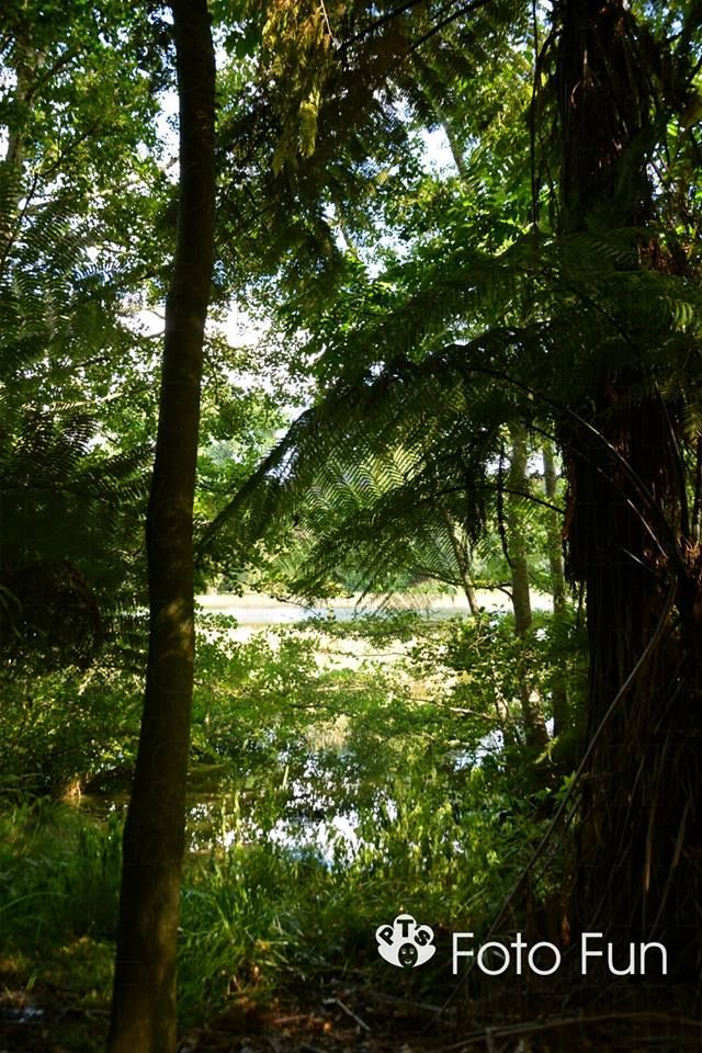Te Koutu park, Cambriddge, NZ