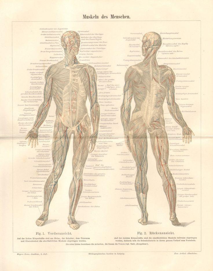 1003 best XIXth Anatomy images on Pinterest | Anatomy, Anatomy art ...