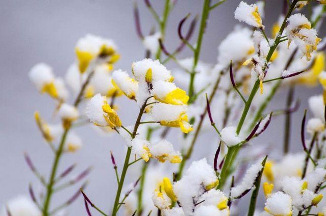 Желтые цветы помогут избавиться от депрессии а снег добавит свежести в ваше настроение