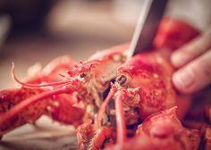 La Suisse interdit de bouillir les homards vivants et d'empêcher un chien d'aboyer