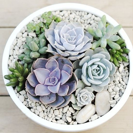 Looking for a unique way to perk up your landscaping or home? Recreate these trendy and easy to DIY succulent gardens to keep your home looking fresh, modern, and updated.