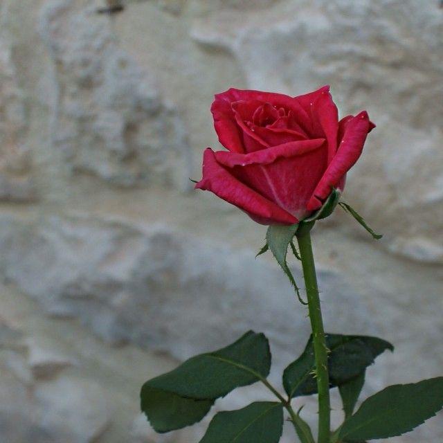 These little details....#Romance #PaliokalivaVillage Photo credits: @dyasvet