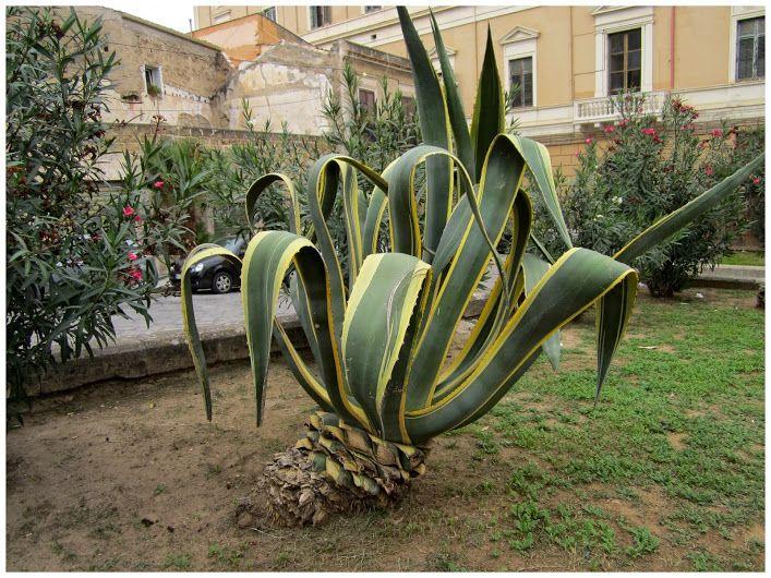 https://plus.google.com/maxtuguese  in Palermo, Sicily 2014