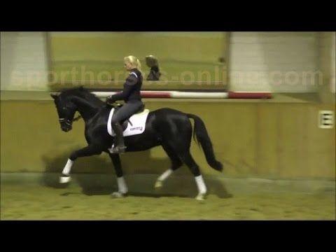 www.sporthorses-online.com 2012 black Hanoverian dressage gelding for sale