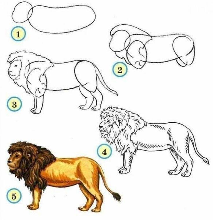 Les 25 meilleures id es de la cat gorie comment dessiner - Lion a dessiner ...