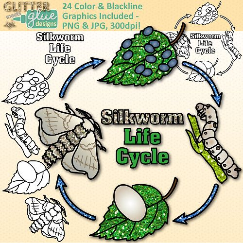 Silkworm Life Cycle Clipart - Glitter Biology Life Science ...