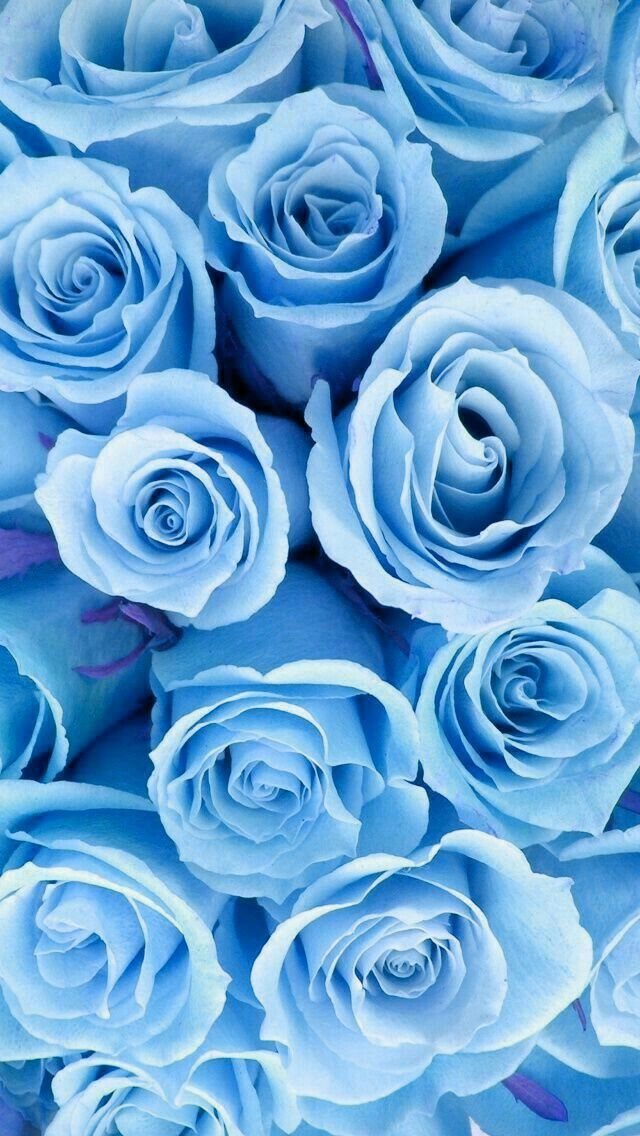 Blume Hintergrunde Iphone Android Blumen Hochzeit Blue Roses Wallpaper Blue Flower Wallpaper Blue Aesthetic Pastel