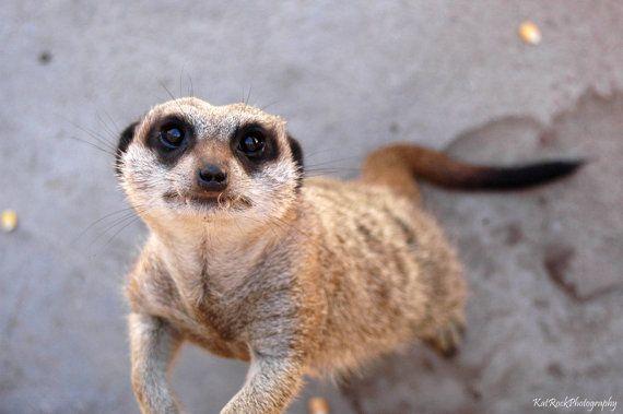 Meerkat by KatRockCreations on Etsy, €12.00