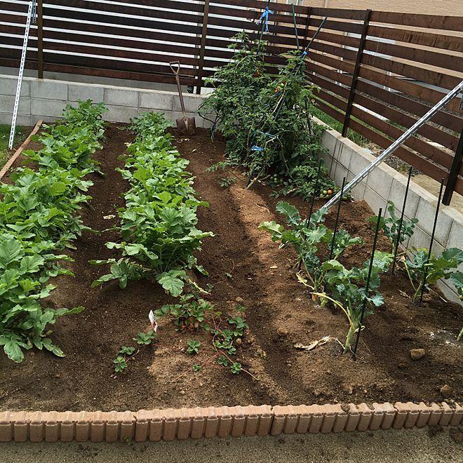 家庭菜園 畑 庭のインテリア実例 2017 09 23 09 21 07 Roomclip