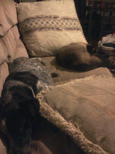 My pets izzy `` right`` minor ``left``