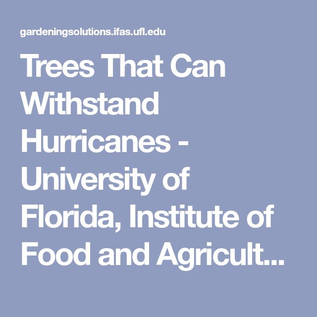 Trees That Can Withstand Hurricanes - University of Florida, Institute of Food and Agricultural Sciences