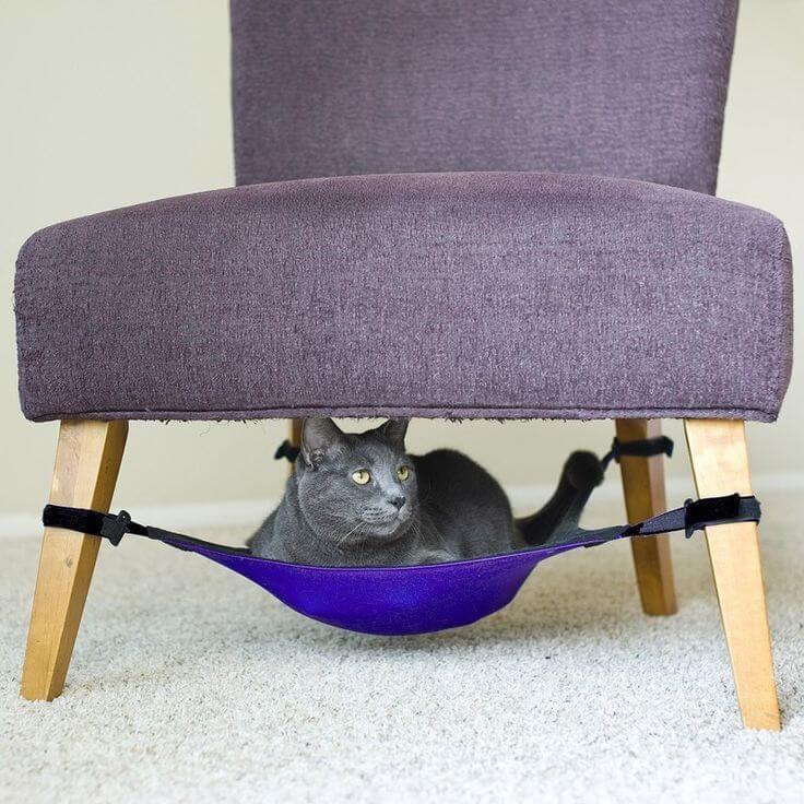 Бизнес идея: мебель для домашних животных