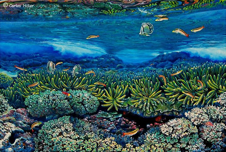 Carlos Hiller - Coral reef and butterfly fish painting ...