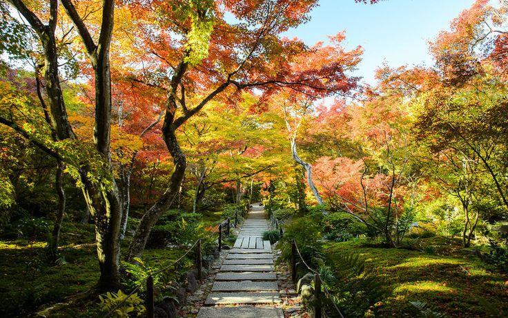 Fall foliage at Hokyo-in Temple