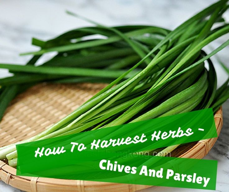 How to harvest - Chives and parcley