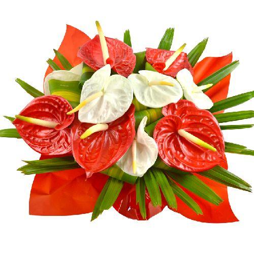 Soprano est un joli bouquet exotique composé d'Anthuriums blancs et rouges, fraîchement importé de notre plantation à la Martinique. Fleurs Lointaines.