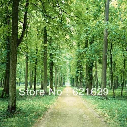 Плотные леса 8'x8 'ср Компьютерная роспись Scenic Фотография Фон Фотостудия Фон ZJZ-149