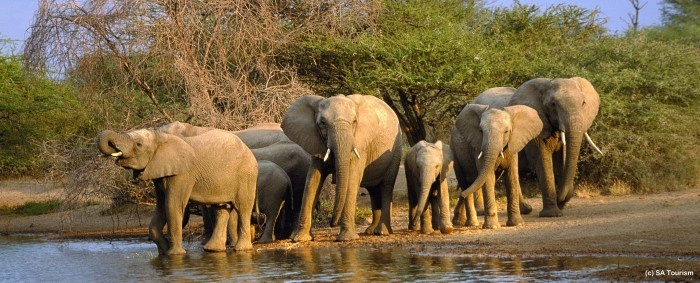Giraffes, Elephants & Warriors « Life Changing Holidays – Local and International Travel Services