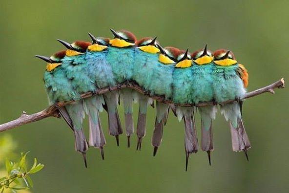 Découvrez nos annonces d'oiseaux et d'autre animaux sur topannonces ►http://www.topannonces.fr/annonces-oiseaux-u12.html