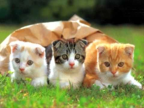 Cute Kittens- Cute Cats: Video Compilation TOP 10 2015 NEW The Most Popu... www....