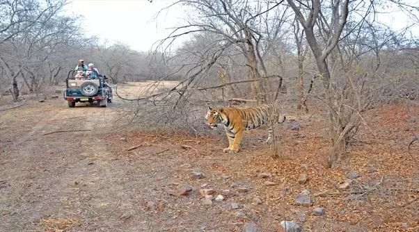 Rajasthan is largest state of India based on area, and when you visit here you will see the old heritage of India. Start with communicating a right travel agency you should prepare for the memorable golden triangle with Ranthambore tour and get the lifetime experience. Now we will understand how you can start your journey.