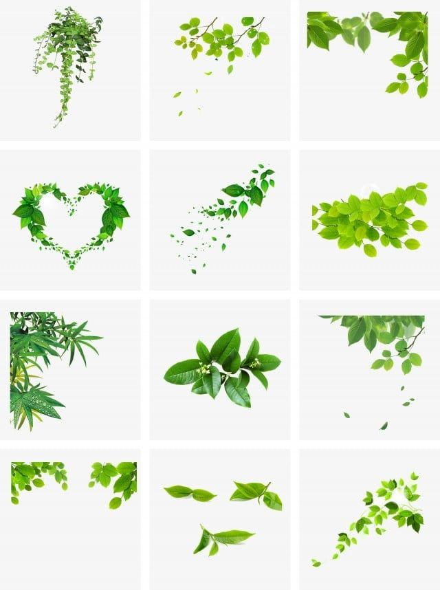 أوراق الشجر الأخضر طبيعة نبات كرمة Png وملف Psd للتحميل مجانا Ilustrasi Daun Bunga Cat Air Tanaman Hijau