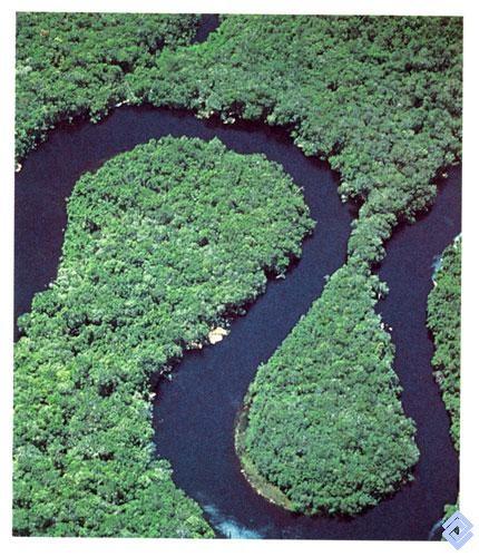 Las sabanas que circundan Chiribiquete (Colombia), están cubiertas por densas selvas surcadas por ríos de aguas negras.  Fotógrafo: Andrés Hurtado García