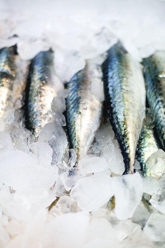 holy mackerel! Garak Shijang, Seoul, Korea