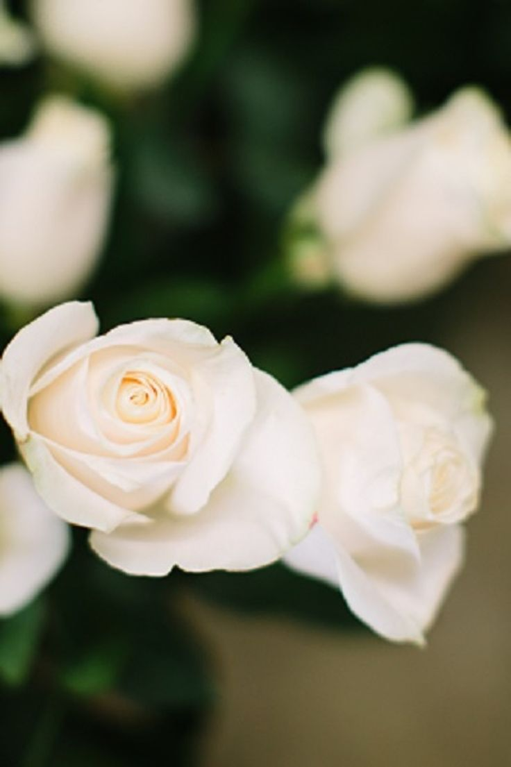 40 best flowers for wedding images on pinterest wedding bouquets 16 inexpensive wedding flowers that still look beautiful for couples on a tight budget izmirmasajfo Choice Image