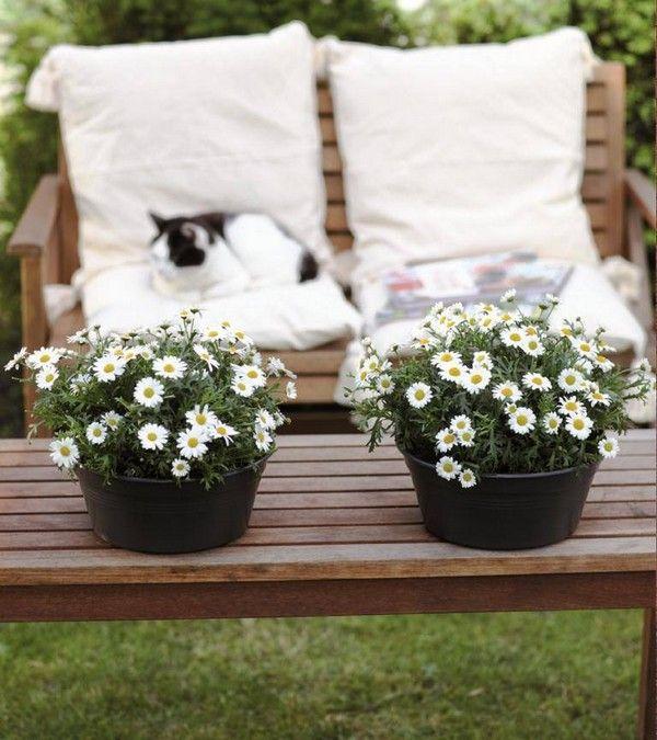 Biale Kompozycje Kwiatowe Biale Kwiaty Na Balkon I Taras Flowers Table Decorations Decor