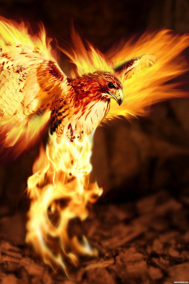 огненные птицы фото изготовлении коктейль бурый