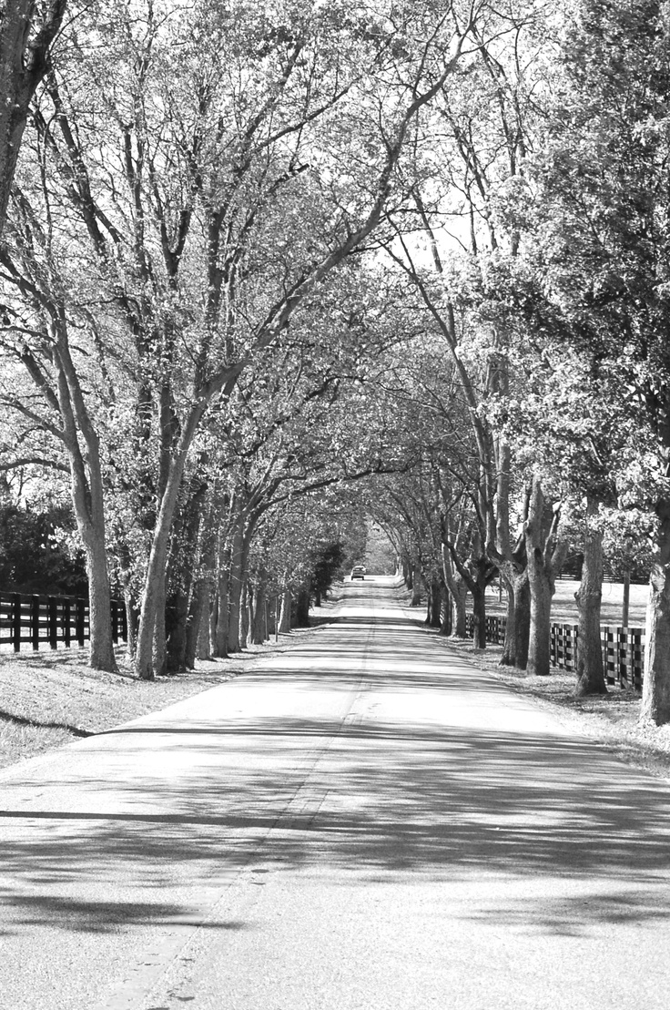 Old Frankfort Pike Lexington Kentucky Photo By Kiera