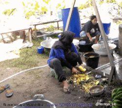 animasi wanita berjilbab buruh pengocek nanas