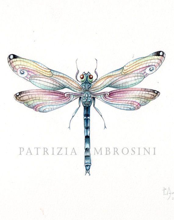 PRINT 9X7..  dragonfly..... PRINT art.. by happyapplebumblebee, $16.00