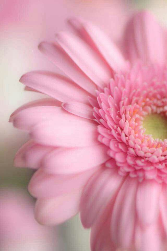 Pin By Destiny Of Angels On Flowers Pink Flowers