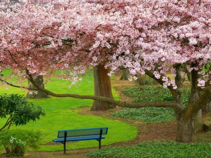 bello florecer