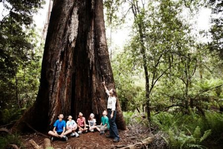This tree can be seen near Grant's Picnic Ground and it really is that big.