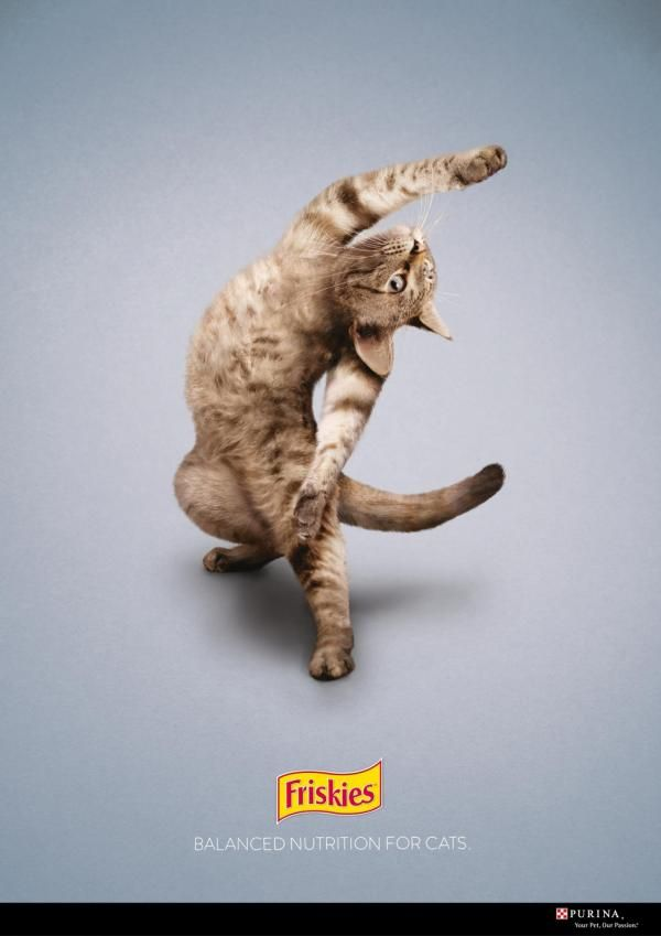 this cat exercises more than i do cats marketing cat vertising cats cat exercise. Black Bedroom Furniture Sets. Home Design Ideas