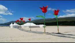 Tulips - wedding on a beach
